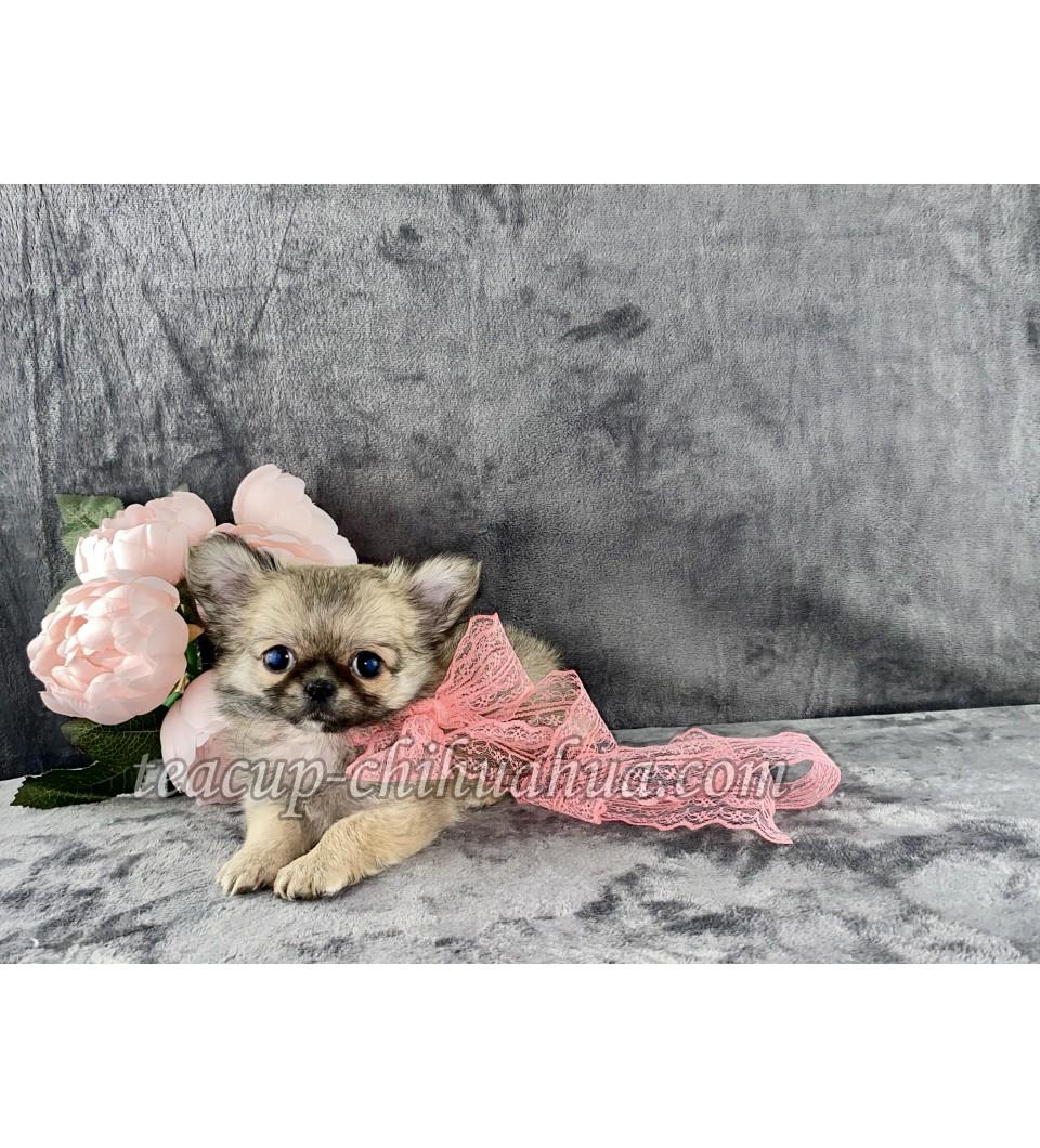 Tiffany Small Doll