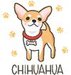 Mini Chihuahua | Teacup-Chihuahua.com